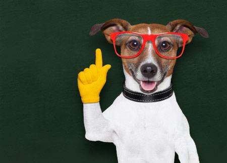 R & D dog